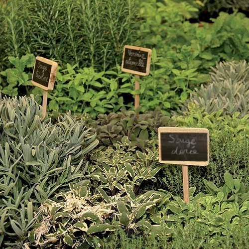 les herbes aromatiques bio en cuisine valenciennes. Black Bedroom Furniture Sets. Home Design Ideas